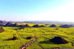 罗平油菜花:金鸡村组图