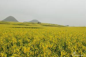 罗平旅游攻略:南宁至罗平自驾游线路