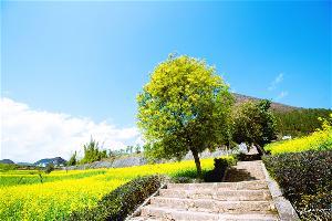 罗平九龙瀑布2-3月旅游风景